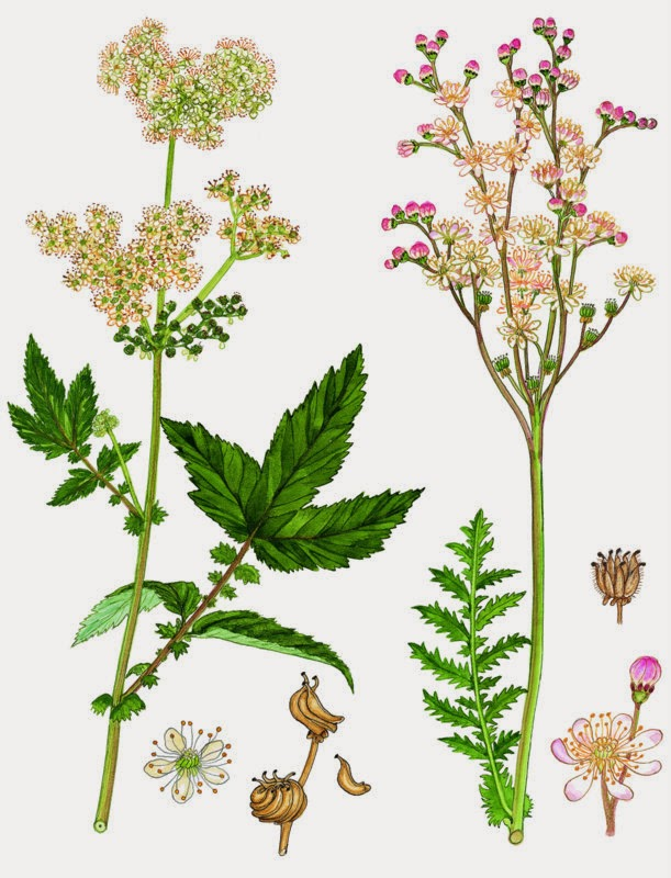 dansk flora gyldendal